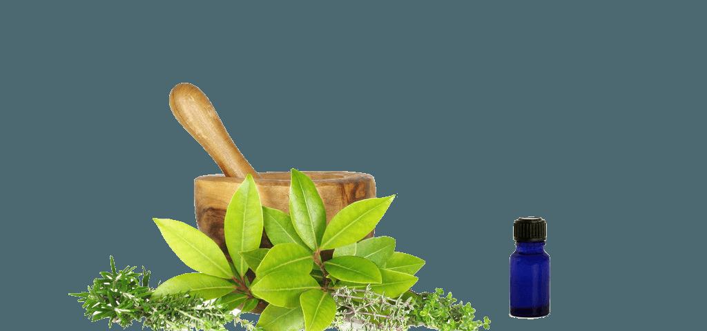 Ayurvedic herbs for improvement of immunity