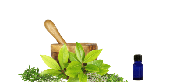 Ayurvedic herbs for improvement of immunity