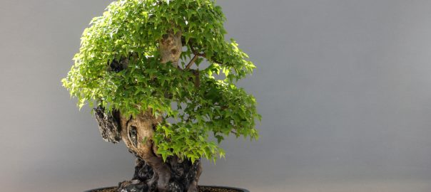 The art of creating Bonsai