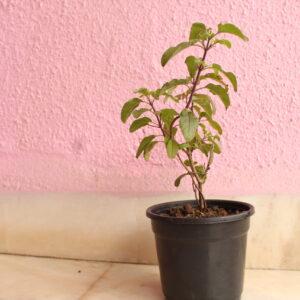 Worship plants