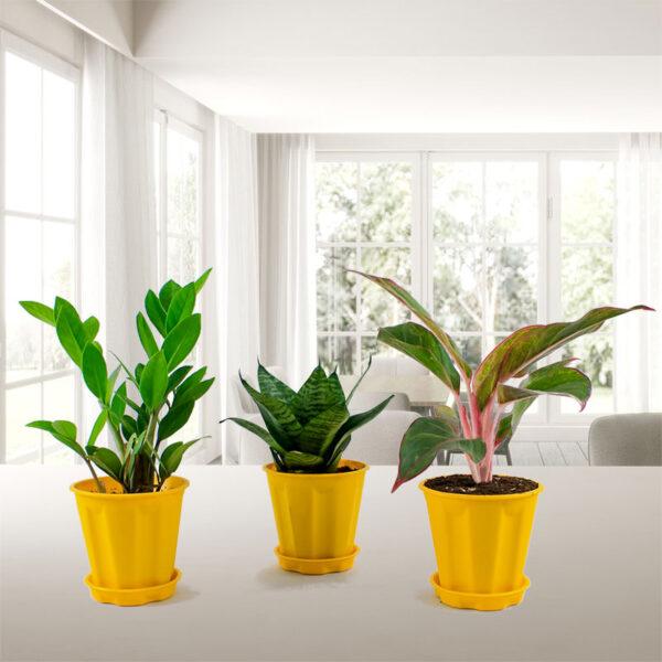 Top 3 Indoor plants pack