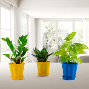 NASA Recommended Best Air Purifying Indoor Plants Pack