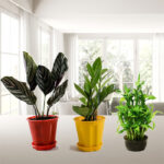Best 3 Premium Decorative Plants for Home and Office