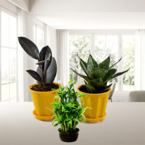 Best Table Top - Office Desk Plants