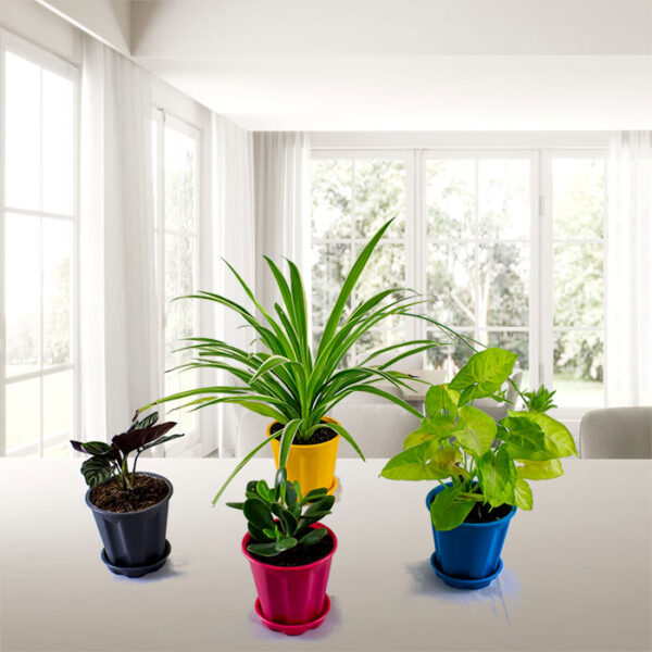 Table Top plants 5 products Pack