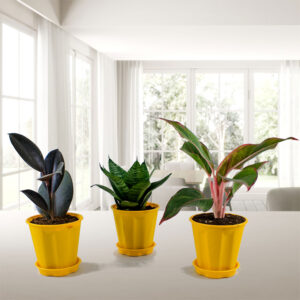 Top 3 Indoor Special Decorative Plants Pack