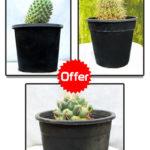Cactus Offer