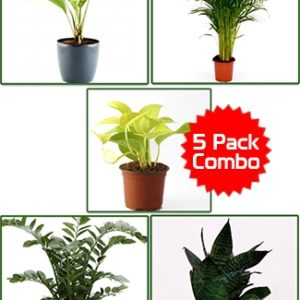 Air purifier 5 pack combo