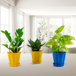 Air Purifier + Home Decorative 3 Indoor Plants Pack