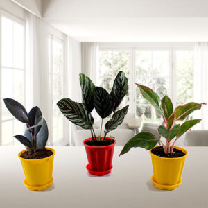 Top 3 Delightful Indoor Plants Pack