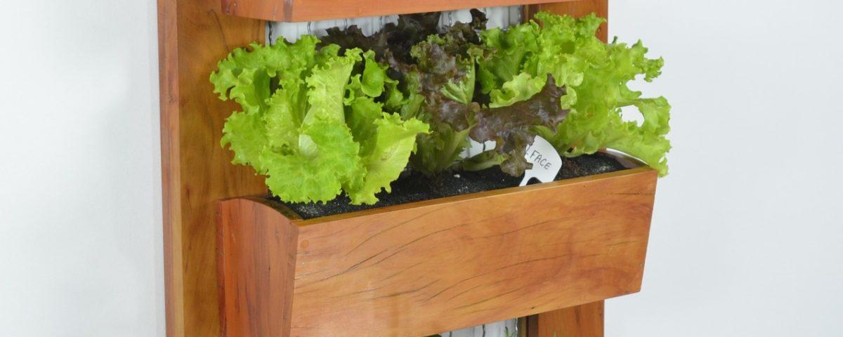 How to do Vertical Gardening