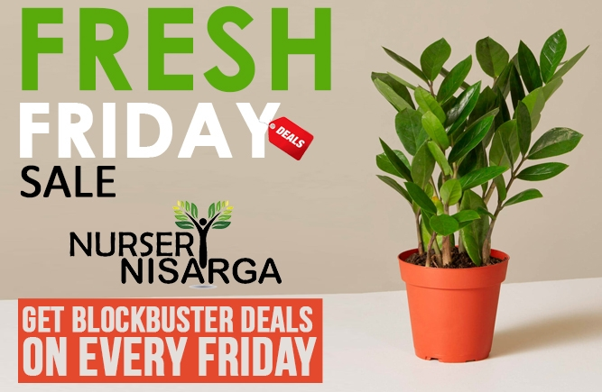 Fresh Friday Sale