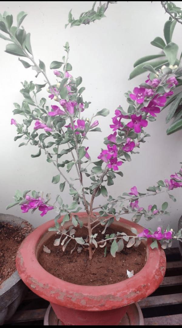 Nikodia plant Nursery