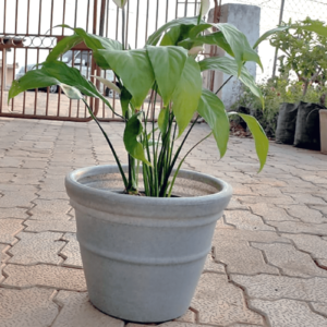 Premium Quality Decora pot for Home, office decorative plants