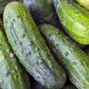Buy Cucumber seeds, Kakadi online on Nursery Nisarga