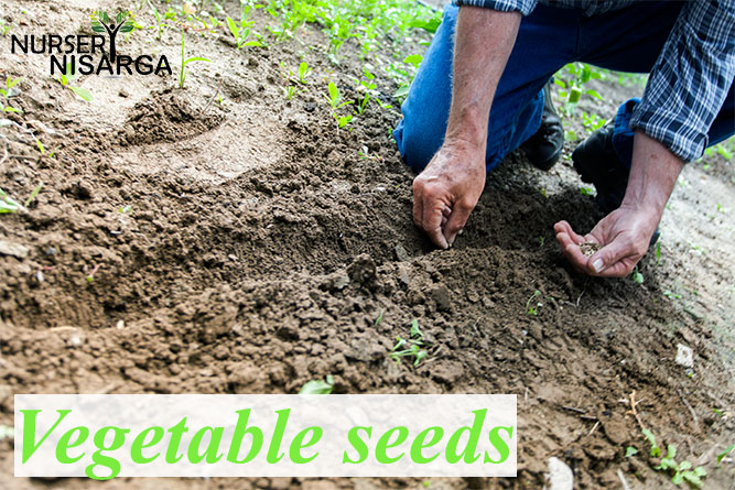 Buy Vegetable Seeds for Home, kitchen gardening