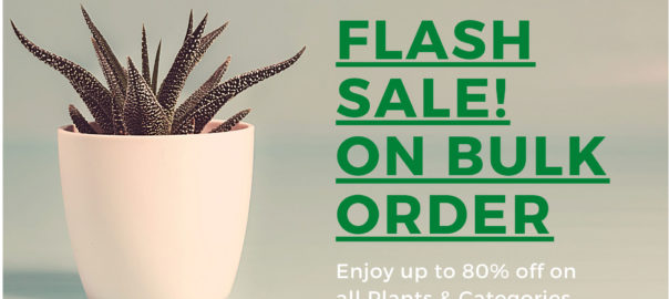 Flash Sale at Nursery Nisarga