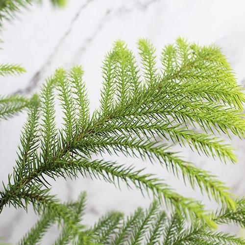 Buy Christmas Tree (Big Size with 6 inches Pot) - Nursery Nisarga
