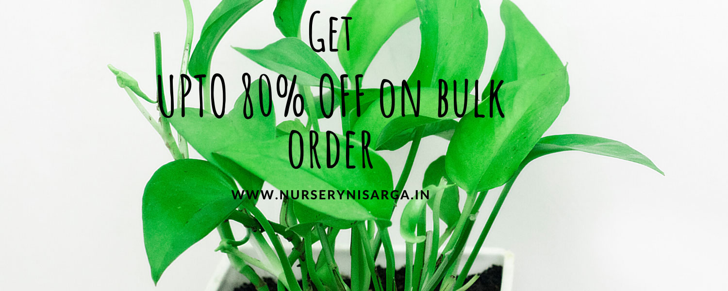 Bulk order sale on plants