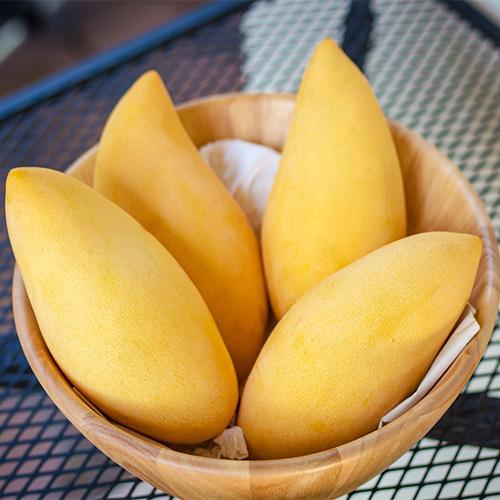 Buy Mango (Mallika) Plant - Nursery Nisarga