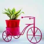 Buy cycle pot online at lowest price on Nursery Nisarga
