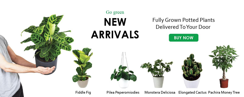 New arrival exotic plants - Nursery Nisarga store