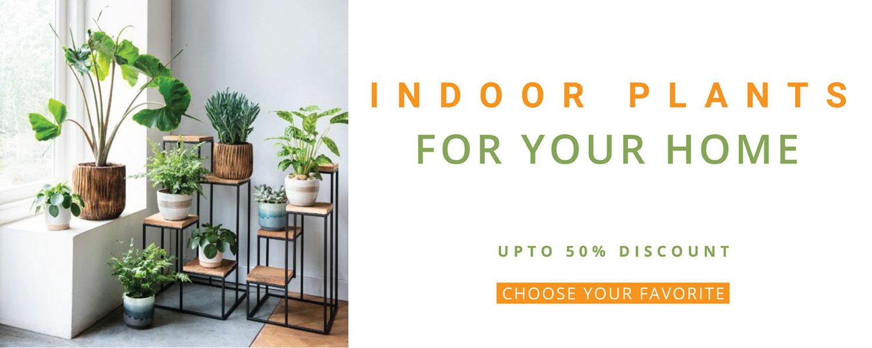 Indoor Plants Upto 50% Discounts
