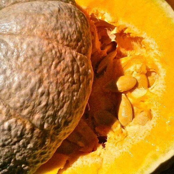 Buy Pumpkin seeds , kadu seeds - Nursery Nisarga