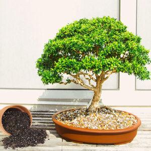 Buy Bonsai Mix - Nursery Nisarga