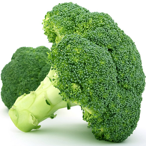 Buy Broccoli Seeds - Nursery Nisarga
